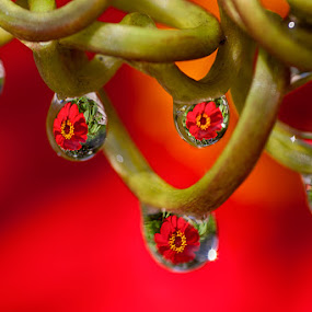 Red Flower by Charlie Rosadi - Nature Up Close Natural Waterdrops