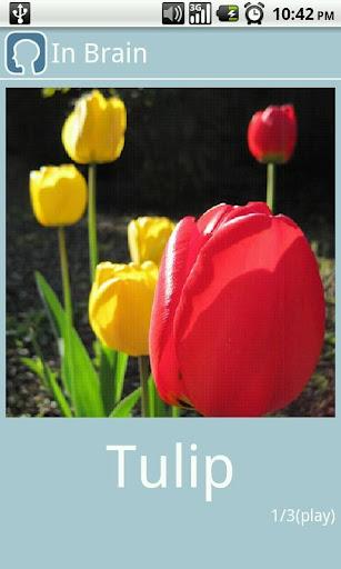 【免費教育App】In Brain (Image memorization)-APP點子