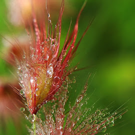by Saefull Regina - Nature Up Close Leaves & Grasses