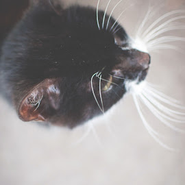 by Rachel Plowman - Digital Art Things ( cat black white whiskers furry soft )
