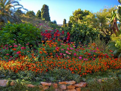 Donde brilla el arcoiris un paseo por mar i murtra Plantas jardin mediterraneo