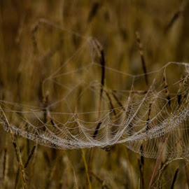 web support by John Westwood - Nature Up Close Webs