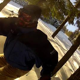 Golden Trees by Steve Hansen - Sports & Fitness Snow Sports ( skiing, winter, powder, snowbording, trees )