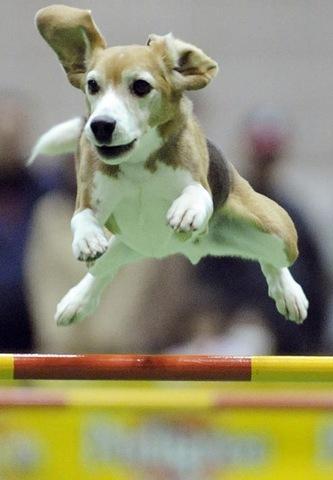 fly_dog