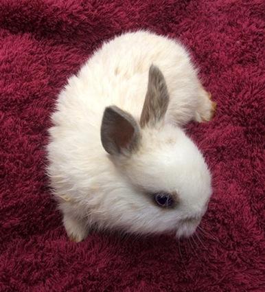 cute rabbit photo 9