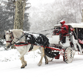 Horse and Buggy in Central Park Snowstorm by Gina Gomez - Animals Horses ( winter landscape, winter, snowstorm, winter image, winter photo, photos of winter, new york winter, snowstorm photo, central park winter, photos of snow, snow landscape )