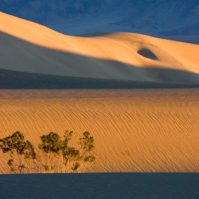 Death Valley dunes at sunrise by Gale Perry - Landscapes Deserts (  )