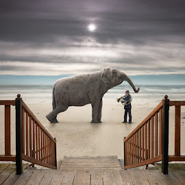 Lesson by Dariusz Klimczak - Digital Art Animals ( elephant, sea, musician, beach, surreal )