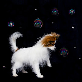 A Puppy and Some Bubbles by Kirk Evans - Animals - Dogs Playing