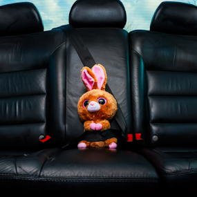 Safety Bunny by MIGUEL CORREA - Artistic Objects Toys ( car, easter, bunny, seat, belt, seatbelt )