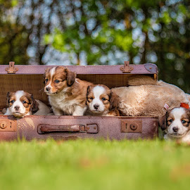 Ready to go...? by Selda Schretzmann - Animals - Dogs Puppies