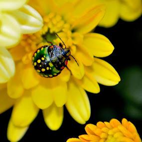 Un mic vizitator. by Jean Bogdan Dumitru - Animals Insects & Spiders (  )