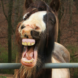 Happy Horse by Christy Berry - Animals Horses ( horse.equine.farm.ranch. )