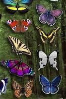 Screenshot of Butterfly Wallpaper
