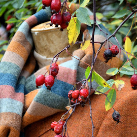 Autumn by Heather Aplin - Artistic Objects Clothing & Accessories ( jacket, autum, outdoors, fall, dummy, scraft, wool, linen, berries )