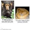 Beberapa Hewan Dengan Harga Yang Termahal Di Dunia (Gambar 2)