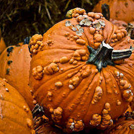 Pumpkins by Andrew Langham - Nature Up Close Gardens & Produce ( autumn, pumpkins, fall, gourds, halloween,  )