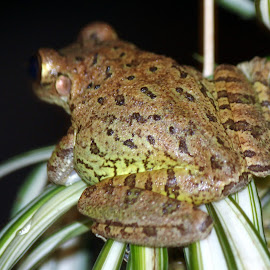 Where is the exit ? by Kathy Bahrs- Daniels - Animals Amphibians (  )