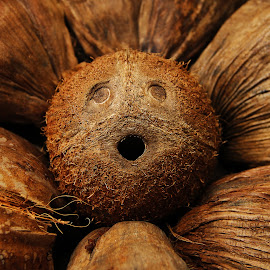 Still Alive  by Mohan Babu - Nature Up Close Other Natural Objects ( nature, coconut cork )