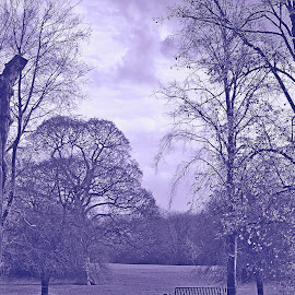 Misty  blue by Gordon Simpson - Landscapes Prairies, Meadows & Fields
