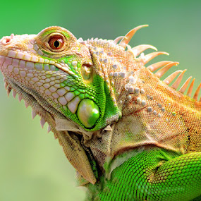 green... by Sandi Nopri yanto - Animals Reptiles