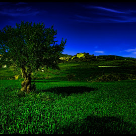Blufi of Sicily by Marcello Fiorani - Landscapes Prairies, Meadows & Fields