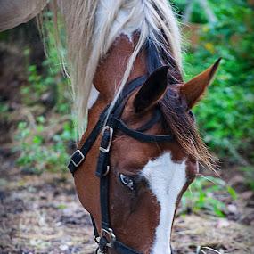 Brake time by Pablo Barilari - Animals Horses ( horses, horse, eating horse, animal )
