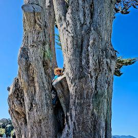 Hiding by Barbara Brock - Babies & Children Children Candids ( huge tree, boy in a tree, tree trunk )