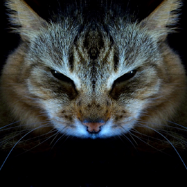 Think you are the cleverest? by Jurijs Ratanins - Instagram & Mobile Other ( look, mobilography, cat, pet, portrait )