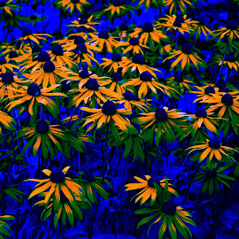 Flowers of a different color by Tony Moore - Digital Art Things ( abstract, blue, color, nc, flowers,  )