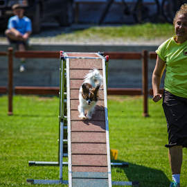 Dog Agility Competition by Stanislav Horacek - Animals - Dogs Running ( field, park, woman, dog )