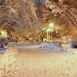 Winter wonderland by Ion Alexandra - City,  Street & Park  City Parks ( winter, winter scenery, snow, snowday, night shot,  )
