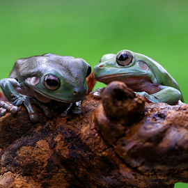 WHISPERS  by Esther Pupung - Animals Amphibians