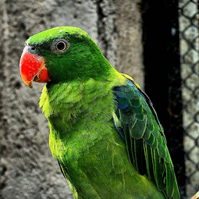 Green bird ... by Nyoto Nugroho Poospo - Animals Birds