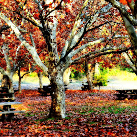 Autumn Leaves by Brian Blood - City,  Street & Park  City Parks ( park, tree, autumn, leaves,  )