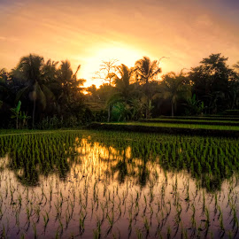 Sunset in Reflection of Fields by Randi Pratama M - Landscapes Sunsets & Sunrises ( reflection, sunset, fields,  )