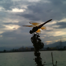 Evening Rest ! by Darshan Trivedi - Instagram & Mobile Android ( macro, nature, sunset, beautiful, lake, rest, dragonfly, evening )