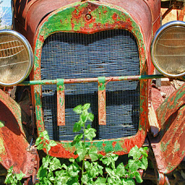All Grown Over! by Fred Herring - Transportation Automobiles