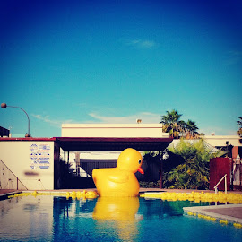 Ducky by Allen Albano - Instagram & Mobile iPhone ( duck, iphone, animal )