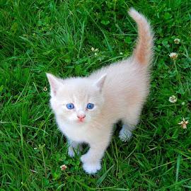 by Brandi Bernier - Animals - Cats Kittens