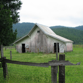 White Barn in Dunsmuir by Christine B. - Buildings & Architecture Other Exteriors ( fence, barn, california, white, dunsmuir )