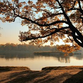 One more autumn by Maxim Malevich - City,  Street & Park  City Parks ( tree, park, season, autumn, oak, fall, color, colorful, nature )