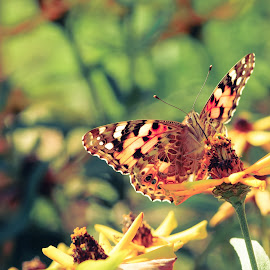 Drunk with flower by Lão Hạc - Nature Up Close Gardens & Produce ( butterfly, macro photography, garden, flower )