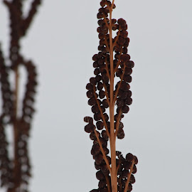 Winters walk by Lisa Susin - Nature Up Close Other plants ( plant, nature, snow, weed,  )