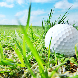 Golf Ball by Jennifer James - Sports & Fitness Golf ( golf ball, grass, outdoors, sports, golf )
