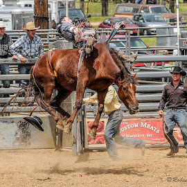 Rodeo by Linda Robinson - Sports & Fitness Rodeo/Bull Riding ( horse, sports, rodeo, bareback, animal )