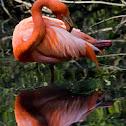 Fenicottero Rosso