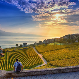 Rivaz VD, Switzerland by Kitty Bern - Landscapes Prairies, Meadows & Fields (  )