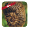 Easy braid hairstyles 9.0.0 Apk