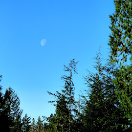 Moon through the trees by Teri Parrish - Landscapes Forests ( moon, sky, blue sky, nature, blue, tree line,  )